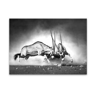Obraz Styler Glas Animals Gazelle, 70 x 100 cm